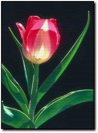 Tulipanes - Alambre galvanizado manualidades ...